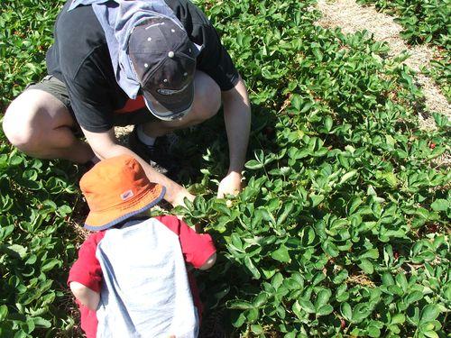 100611 017 - Daddy and Jasper picking berries