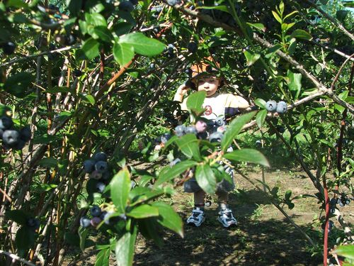 100802 006 - Hiding Behind a Blueberry Bush
