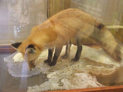 DSCF2603 - fox