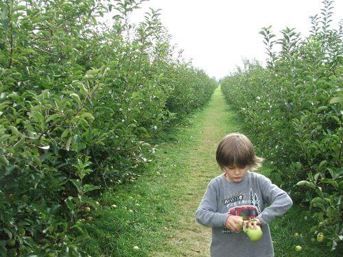 DSCF3630 - Apple Orchard