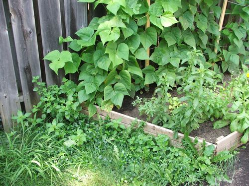 DSCF3068 - overgrown weeds