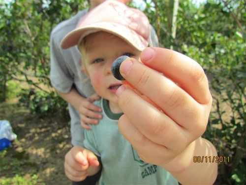 IMG_1048 Holding out a Blueberry