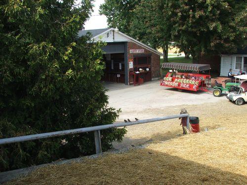 DSCF3609 - Apple Farm
