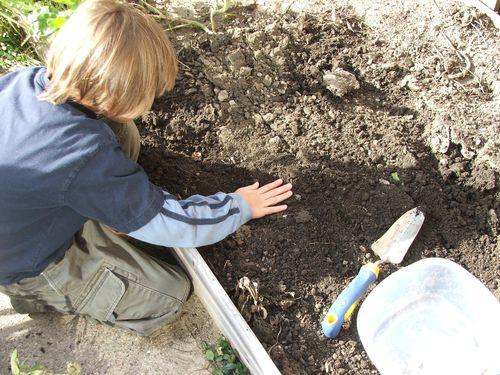 DSCF4173 - Planting garlic