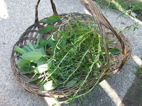 DSCF3991 - Herb Basket