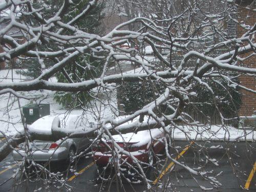 DSCF4431 - Snow on Tree Branches